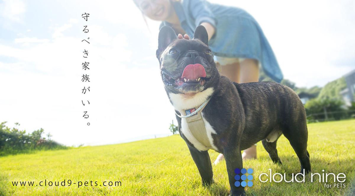 cloud nine for PETS